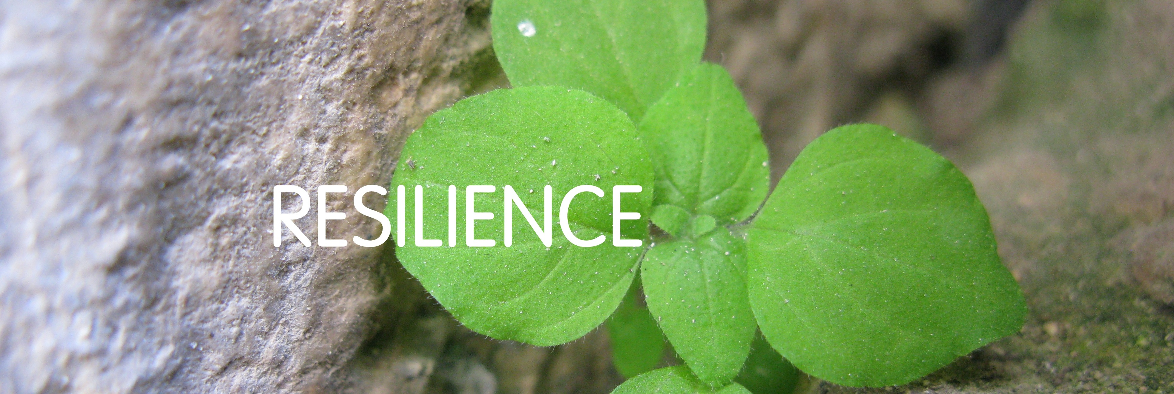resilience in ngos